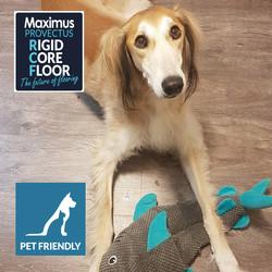 Maximus Provectus Rigid Core Flooring - Lentia