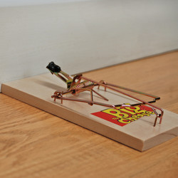The Big Cheese Wooden Traps