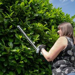 Webb 20V 50cm Cordless Hedge Trimmer
